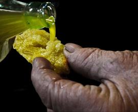 Raccolta delle olive e visita al frantoio ROI